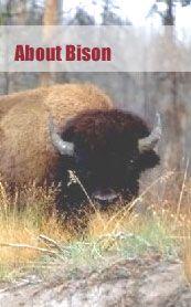Raising Bison - Canadian Bison Association