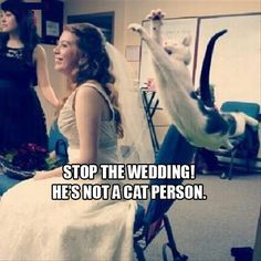 Funny Jumping Cat #Person, #Wedding