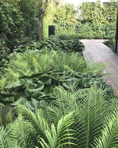Beginner's Guide To Tropical Landscaping Design Plans – My Best Rock Landscaping Ideas Tropical Landscaping, Tropical Garden, Backyard Landscaping, Landscaping Ideas, Backyard Ideas, Back Gardens, Outdoor Gardens, Landscape Design, Garden Design