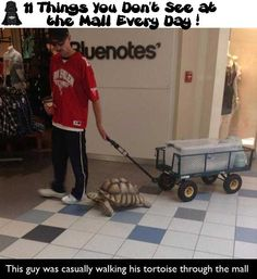 11 Things You Do not See at the Mall Every Day