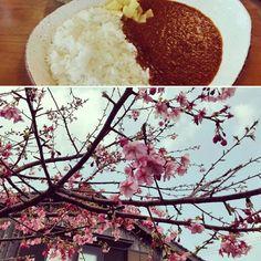 【everyday_is_anewday】さんのInstagramをピンしています。 《喫茶樹林のオーロラカレー  思いもかけず、河津桜に出逢い 故郷を思い出す。  #桜 #cherryblossom  #カレー #carry #ふるさと  #hometown》