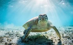 Endangered Sea Turtles Are Getting Nasty, Deadly Tumors, and We're to Blame