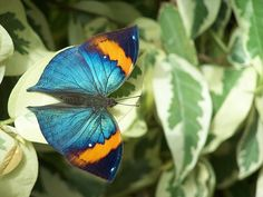 Butterfly by amandamcmom, via Flickr