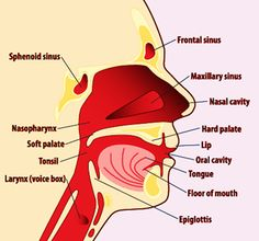 HPV and oropharyngeal cancer FACTS & FIGURES (2013)