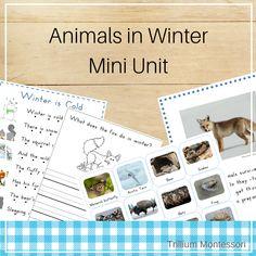 Animals in Winter- Mini Unit