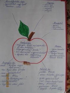 "Kiscsoportos projektek - "" Gyermekkorunk jelei ott maradnak életünk helyszínein, ahogy a virág illata is ott marad a szobában, amit díszített""  - Chateubriand Kindergarten, Bullet Journal, Personalized Items, School, Apple, Kindergartens, Preschool, Preschools, Pre K"