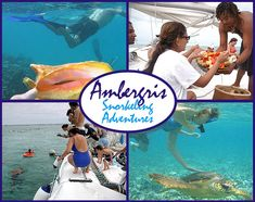 Snorkel trips from San Pedro to Shark Ray Alley & The Blue Hole Belize Tours, Independence Of The Seas, Ambergris Caye, Blue Hole, Tour Operator, Snorkeling, Trip Planning, Underwater, Diving