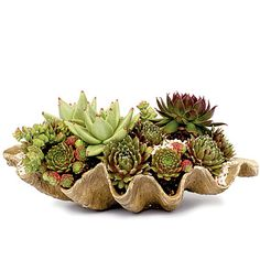 Putting this together next week!  Using faux succulents.