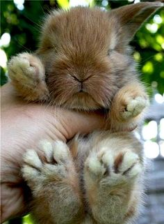 Look how cute and tiny my little baby bunny feet and paws are! #bunny #babybunny #paws