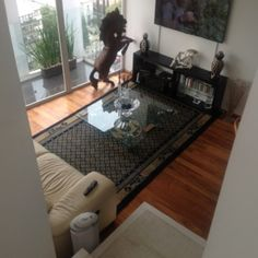 House sitting - Mexico City, D.F., Mexico -