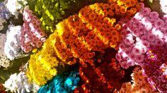 En el Mercado Central, se puede ver muchos tipos diferentes de flores de muchos colores. Es posible disfrutar de las flores sin comprarlos.
