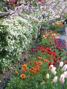 Spring | Spring Walk, Macquarie Wall, Royal Botanic Gardens, Sydney