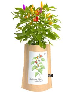 If your pal with the green thumb is down that winter means a gardening hiatus, then she'll love this festive organic garden-in-a-bag that delivers miniature peppers that resemble lights on a Christmas tree.
