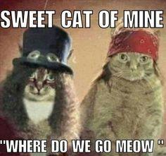 Guns 'n' Roses Cats. Cute Cat Memes, Funny Cats, Funny Animals, Funny Memes, Animal Funnies, It's Funny, Funny Sayings, Music Humor, Music Memes