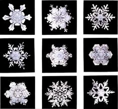 Google Image Result for http://4.bp.blogspot.com/_9g1Ege5PHsE/TRDUWEZxQ8I/AAAAAAAADI0/wVHmwWfQEgU/s1600/snowflakes.jpg
