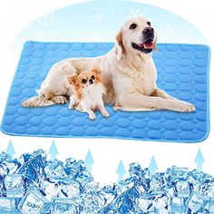 Petplus Dog Cooling Mat Pet Cooling Pads For Dogs Dog Mats Dog Accessories Dog Cooling Vest To Help Your Pe Dog Cooling Mat Dog Cooling Vest Pet Cooling Pad