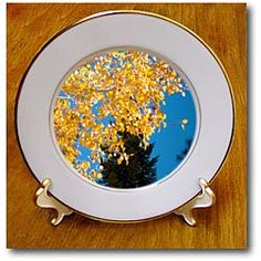 Yellow leaves framing a blue sky and pine tree Plate