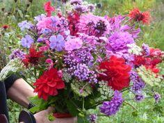 prachtige biologische bloemen plukken bij kwekerij zeldenrust in wapse