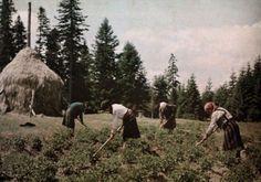 1931 - Femei muncesc la câmp în Munții Carpați FOTO vintag.es