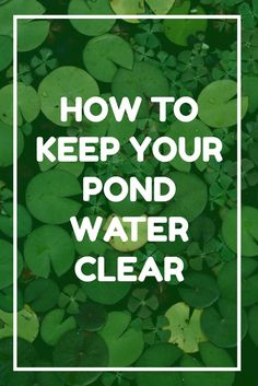 There's nothing worse than a pond filled with green water and algae. Fortunately, there are a whole host of techniques that will help keep your pond water clear and everything smelling fresh and sweet. Click here to find out how!