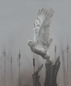 Owl in fog. Gorgeous photo. Virtually eliminate pet odors with CritterZone. http://www.critterzoneusa.com
