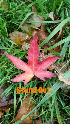 Facebook.com/miraclefoxhealing  Be yourself always. Stand out. Let go of fear. Let go of judgement. Let go of everything that doesn't serve you. #standout #beyourself #letgo #miracles #miraclefox #spiritualguidance #spiritual #loveandlight #spiritguide #spiritguides #starchild #starseed #crystalchildren #indigochildren #rainbowchild #rainbowchildren #crystalchild #indigochild #lightwork #lightworker #angel #angels #sirius #arcturian #pleadian #dogstarchildren Let Go Of Everything, Indigo Children, Star Children, Spiritual Guidance, Spirit Guides, Love And Light, Healer, Fairy Tales, Angels