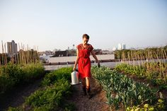 Eagle Street Rooftop Farm | 6,000 sqft. green roof organic vegetable farm located atop a warehouse rooftop in Greenpoint, Brooklyn, NY