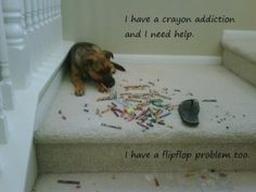 I think all dogs have same addiction!