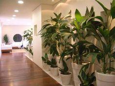 Interior landscape with pots