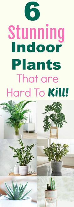6 beautiful indoor plants even you cant kill - House Plants - ideas of House Plants - These gorgeous plants are low maintenance so even if you forget to take care of them it's really hard for them to die! House Plants Decor, Plant Decor, Garden Plants, Organic Gardening, Gardening Tips, Indoor Gardening, Vegetable Gardening, Belle Plante, Inside Plants
