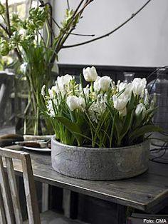 Rózsák Kertje Virág és Dekor: Fehér harmóniában a kora tavaszi virágok