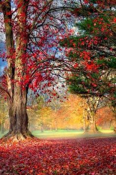 Travel Discover Photo The post Photo autumn scenery appeared first on Trendy. Beautiful World Beautiful Places Beautiful Scenery Amazing Places Nature Landscape Autumn Morning Early Morning Autumn Scenery Autumn Trees
