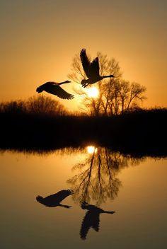 Silhouettes , Sunset flight-Holland