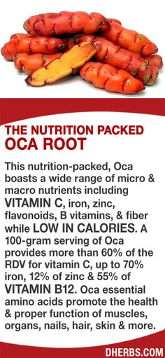 This nutrition-packed, Oca boasts a wide range of micro & macro nutrients including vitamin C, iron, zinc, flavonoids, B vitamins, & fiber while low in calories. A 100-gram serving of Oca provides more than 60% of the RDV for vitamin C, up to 70% iron, 12% of zinc & 55% of vitamin B12. Oca essential amino acids promote the health & proper function of muscles, organs, nails, hair, skin & more. #dherbs #healthtip