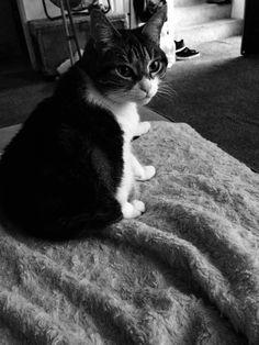 Pretty kitty Pretty Kitty, Pretty Cats, Photography, Animals, Beautiful Cats, Photograph, Animaux, Photography Business, Photoshoot