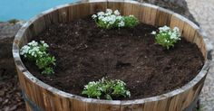 A szomszédom 4 virágot ültetett egy régi hordóba, mikor megláttam mit készített, szóhoz sem jutottam!