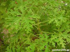 Herbalism, Herbs, Healthy, Herbal Medicine, Herb, Health, Medicinal Plants