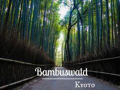 Kyoto Must See: Bambuswald Arashiyama