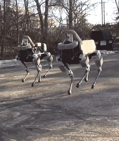 Google's robot dog, Spot! The kick at 1:05 of the source video lol, poor thing