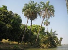 River Gambia, Gambia, Africa