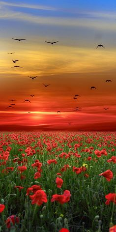 Lest we forget Beautiful Nature Pictures, Beautiful Nature Wallpaper, Amazing Nature, Beautiful Landscapes, Beautiful Flowers, Beautiful Places, Beautiful Sky, Animals Beautiful, Free Android Wallpaper