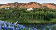 This quiet guest house is within 10 minutes' walk of the Geothermal Park, in Hveragerdi. Iceland, Golf Courses, Mountains, Park, Travel, Google Search, Amazing, House, Pictures