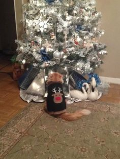 13 Cats Who Are Baffled By The Whole Christmas Tree Thing - The Dodo