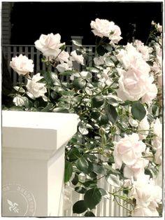 BELDECOR: flowering fences