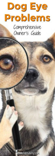 Complete guide to dog eye problems. Causes, symptoms, treatment. Dapple Dachshund Puppy, Black Dachshund, Dachshund Puppies For Sale, Funny Dachshund, Dachshund Gifts, Dog Separation Anxiety, Dog Anxiety, Memes Humor, Dogs Eyes Problems