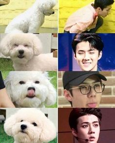 They say an owner looks like their dog... lol