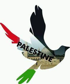Nunca dejemos de denunciar y luchar la libertad es posible no hay opción. #PALESTINA #LIBRE #IslamOriente