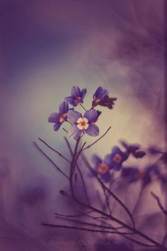 Ethereal spring as my feminine energy   Shot on Fuji, edited on iPhone
