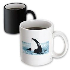 3dRose Killer Whale ( Orcinus Orca ) on surface of water, Magic Transforming Mug, 11oz