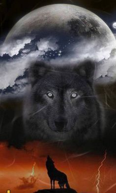 Wolf Beckoning to its Guide. - Wolf Beckoning to its Guide. Wolf Images, Wolf Pictures, Anime Wolf, Beautiful Wolves, Animals Beautiful, Tier Wolf, Wolf Skull, Wolf Husky, Wolf Artwork